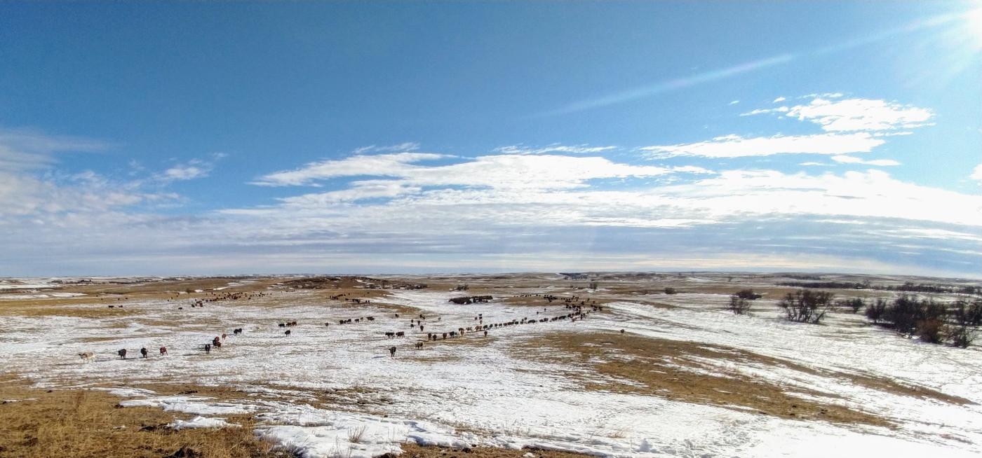 Robert Dennis Ranch